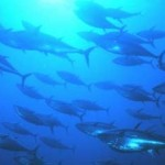 O simbolismo do signo de Peixes