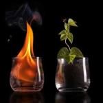 Quatro elementos, quatro tipos de intuição