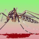 Aedes aegypti: Netuno e Marte picando o Brasil
