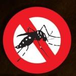 Aedes carioca, o mosquito da gema